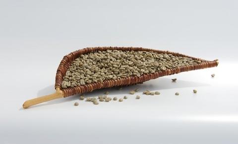 Disponujeme dostatočnými množstvami zelenej kávy na sklade